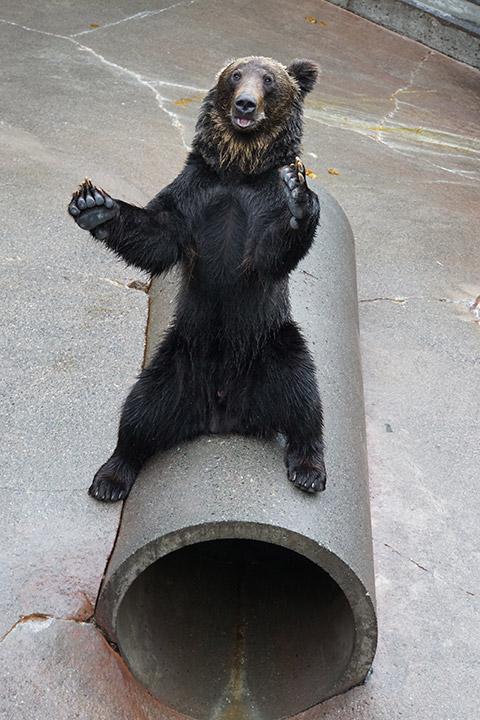 jn-Bear